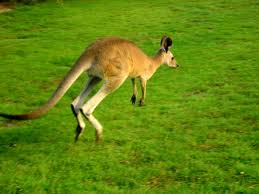 Du học BB Kangaroo - chuyên tư vấn du học Úc và New Zealand